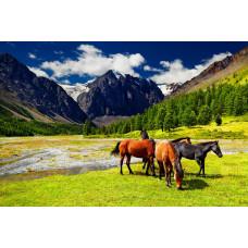 """Евтини Диамантени гоблени """"Пейзаж с коне"""" 50х65 см с 5D ефект с подрамка и красива кутия YSG0016"""